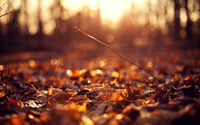 6990282-autumn-leaves-ground-sunset