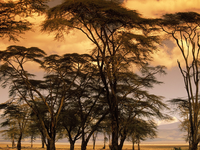 Image_0006.fever_trees_at_sunset