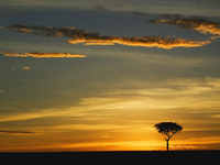 Image_0012.kenya.masai_mara.single_acacia_tree_at_sunrise