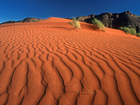 Image_0027.namibia.rand_nature_reserve.crawling_on_the_dune