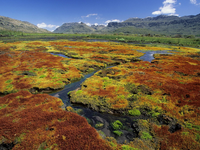 Image_0036.south_africa.northern_cape.cedarberg_wilderness_area.colorful_mosses